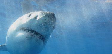 Esquadrão de Tubarões: Ilha do Tubarão Branco