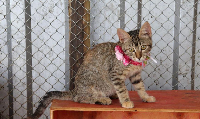 A gatinha Hanna é um dos animais disponíveis para adoção em Brumadinho e região.