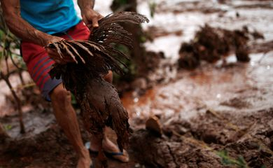 A chicken covered with mud is seen after a dam owned by Brazilian miner Vale SA that burst, in Brumadinho, Brazil January 26, 2019. REUTERS/Adriano Machado