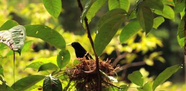 Mari vai conhecer um pouco mais sobre os pássaros