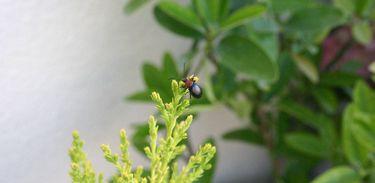 Plantas e Insetos
