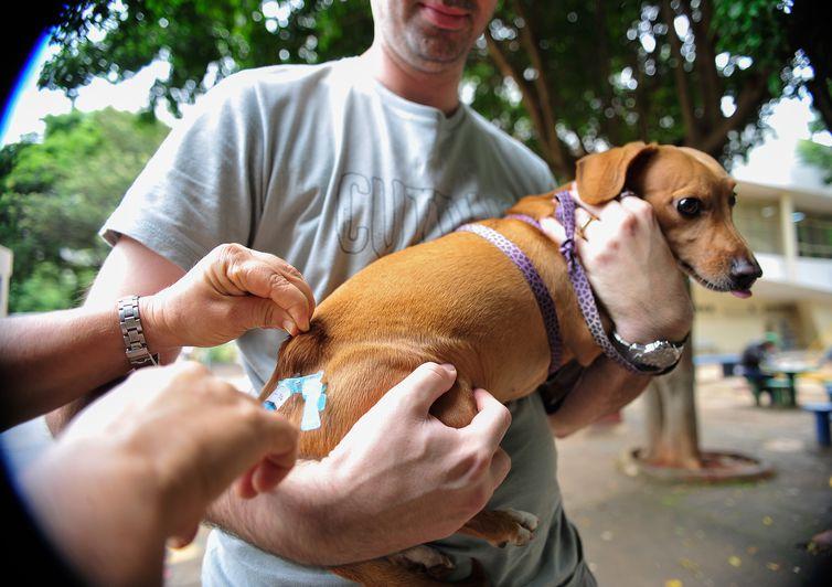 Brasília - A Secretaria de Saúde do Distrito Federal realiza, neste sábado (22), campanha de vacinação antirrábica para cães e gatos, na área urbana (Marcelo Camargo/Agência Brasil)