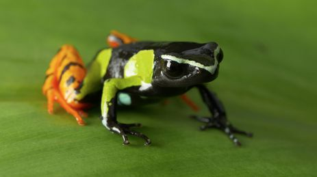 A ilha de Madagascar é o lar de criaturas estranhas