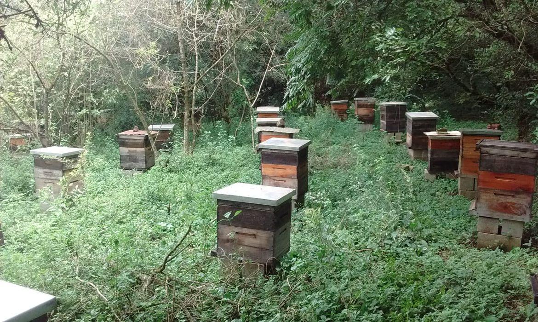 colmeia saudável,abelhas vivas e produzindo
