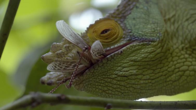 Episódio explora o estranho e rico universo de espécies de Madagascar