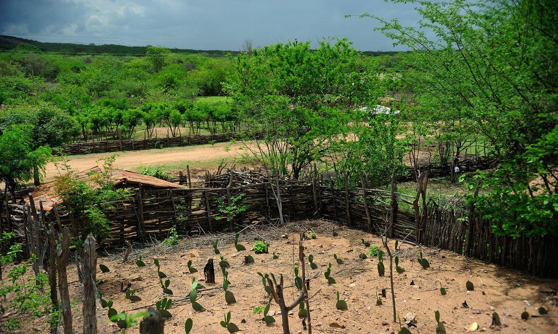 Nova Russas - Moradores convivem com período de seca na comunidade rural de Irapuá. Na foto, a plantação do agricultor João Pinto, 52 anos  (Fernando Frazão/Agência Brasil)