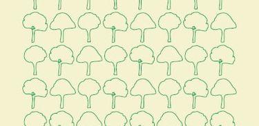 Coalização Brasil Clima, Florestas e Agricultura