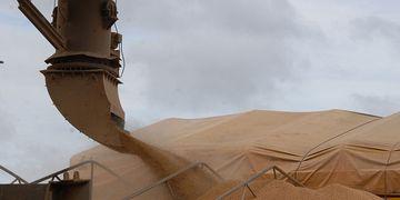 O agronegócio é responsável pela metade das exportações brasileiras