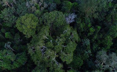 Floresta amazônica vista de cima.