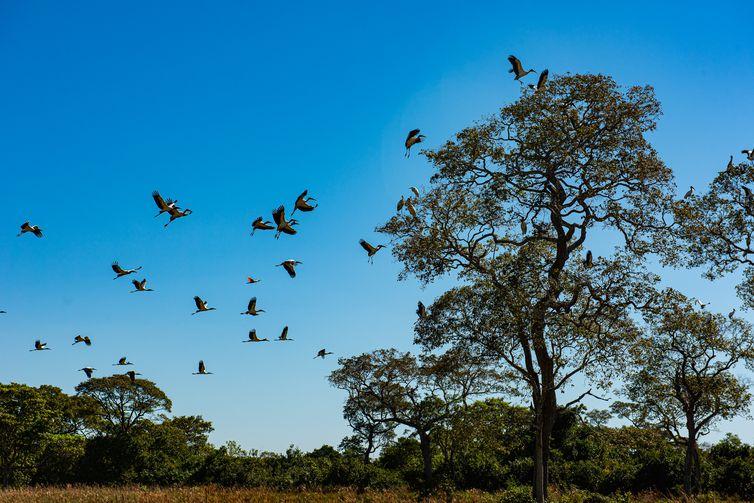 Arvoré Pantanal Matogrossense