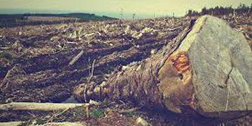 Como os problemas ambientais impactam a economia mundial?