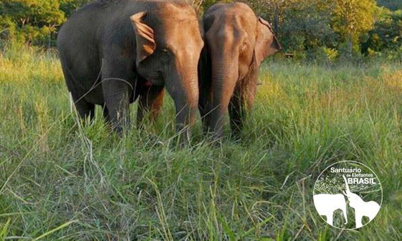 Santuário de Elefantes Brasil RAMBA