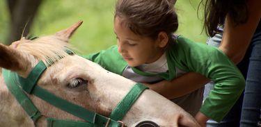Caminhos da Reportagem - Cavalos: parceiros da reabilitação - saúde física e mental