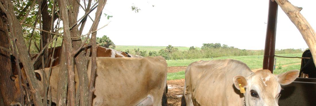 Brasil possui a melhor classificação possível feita por entidades internacionais em relação à doença da vaca louca