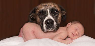 Cachorro próximo a bebê dormindo