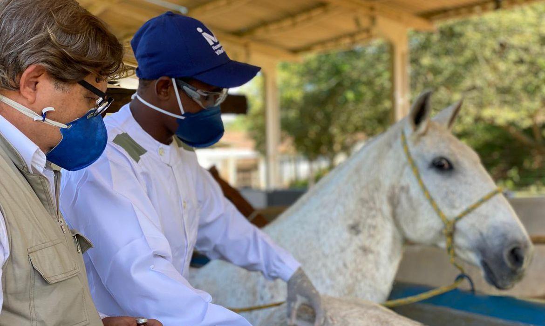 Pesquisadores retiram soro de cavalo