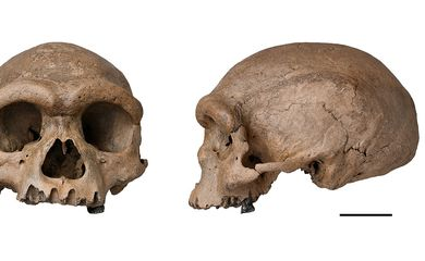 Homo longi é descoberto na China