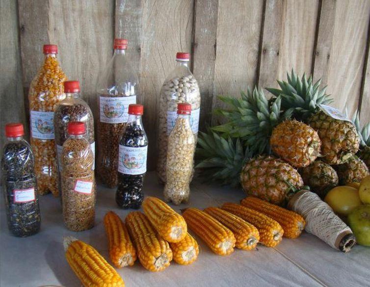 Exemplares de sementes crioulas e outras variedades, como Crotalaria Ochroleuca, Crotalaria juncea, feijão de porco, mucuna preta, feijão comum, milho branco, milho amarelo azedo, maracujá, abacaxi.