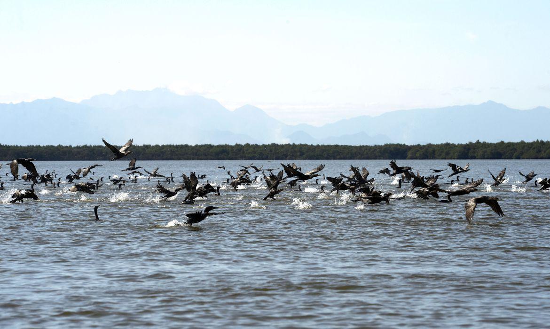 Manguezais da Área de Proteção Ambianetal(APA) de Guapi-Mirim e Estação Ecológica da Guanabara, região hidrográfica da Baía de Guanabara. Na foto, uma revoada de biguá, uma das espécies de aves encontradas na região.