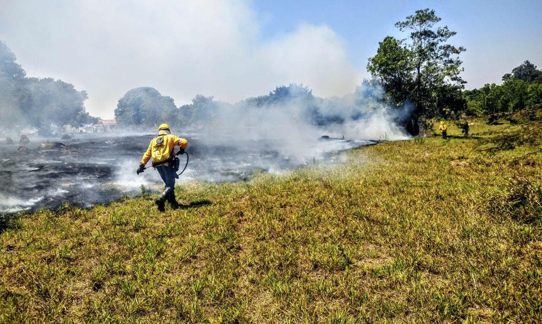 Incêndios florestais nas Unidades de Conservação caem pela metade