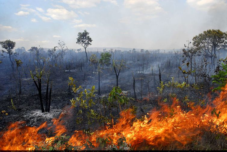 Amazon Forest - Fires and deforestation