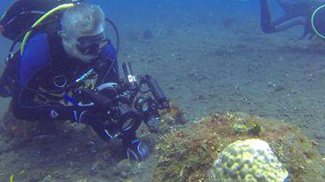 Fábio Freitas, vestido de mergulhador, no fundo do mar, fotografa espécies marinhas