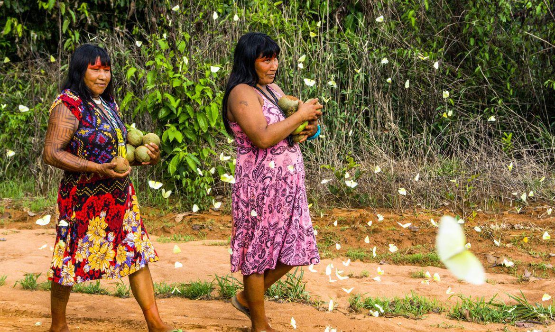 Associaçao Indigena Kisêdjê