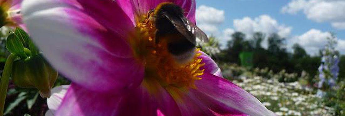 Abelhas são os mais importantes agentes polinizadores