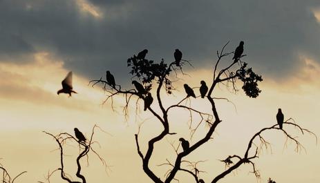 Papagaios no Parque Nacional das Emas