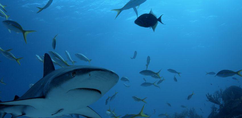 Série documental investiga predadores marinhos