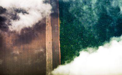 fotografia aérea Floresta amazônica, plantação