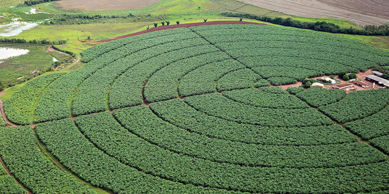 pivôs centrais de irrigação, Plantação de soja
