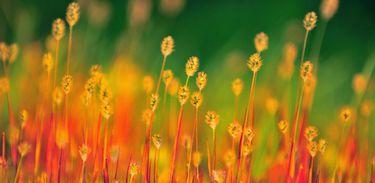 Foto: Divulgação/Flickr/Creative Commons