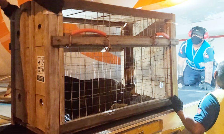 lobo-marinho, Projeto de Monitoramento de Praias da Bacia de Santos (PMP-BS)