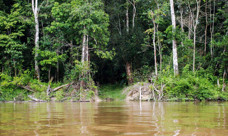Colniza, MT, Brasil:  Caminho aberto por madeireiros às margens do rio Guariba. (Foto: Marcelo Camargo/Agência Brasil)