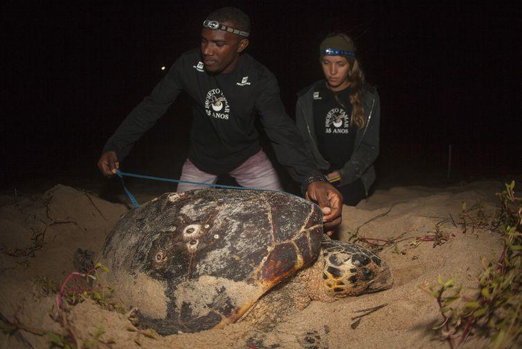 A desova das tartarugas é monitorada em todo o Brasil