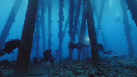 Recifes de Naufrágios investiga tesouros do mundo subaquático