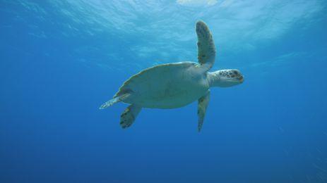 Parques Oceânicos mostra tartarugas marinhas ameaçadas de extinção