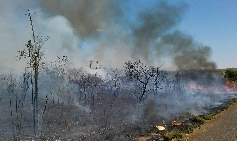 O Cerrado sofre com as queimadas neste período de estiagem,  a baixa umidade no DF no fim de semana levou a Defesa Civil a declarar estado de emergência na capital(Jose Cruz/Agência Brasil)