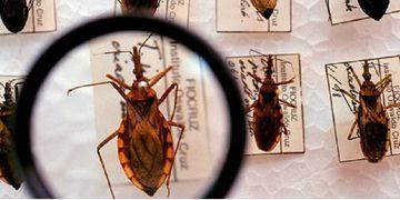 Tarde Nacional fala sobre o Dia Mundial da Luta contra a Doença de Chagas