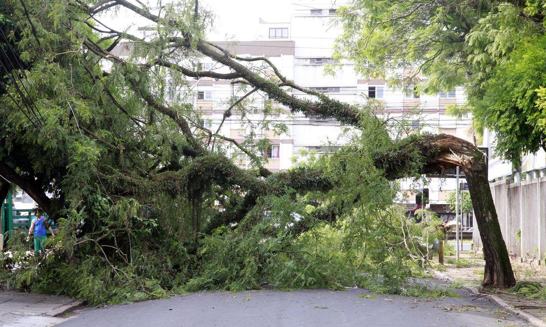Mais de 300 árvores caíram em Porto Alege e muitas atingiram a rede de transmissão de energia elétrica