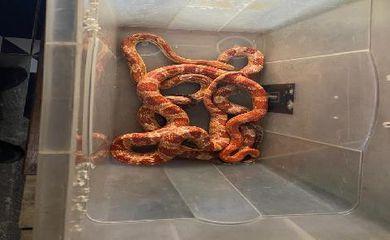 Polícia apreende  cobras exóticas importação  proibida