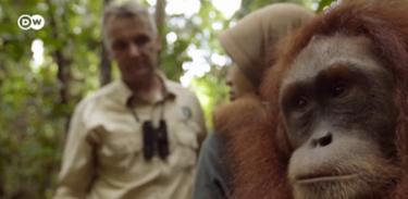 Futurando investiga a semelhança genética entre humanos e chimpanzés