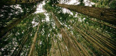O Sistema Agroflorestal é um sistema que reúne as culturas agrícolas com as culturas florestais
