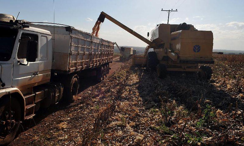 Plantação de soja